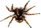 حقایقی در مورد عنکبوتها که نمی دانید