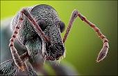 نمای نزدیک و جالب از صورت حشرات / عکس
