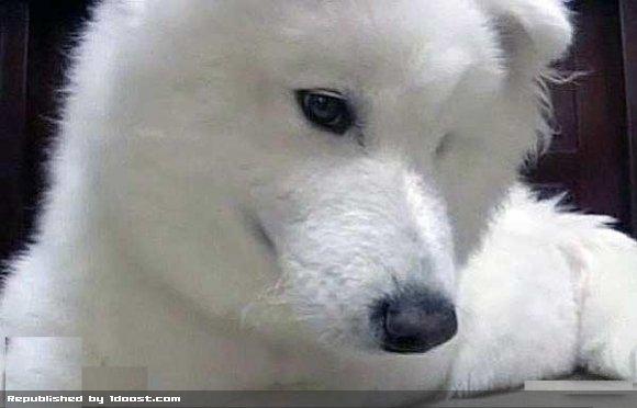 1355907427 سگی که ریاضی می داند