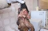 خارج کردن جنینی از بدن پسر ۲۲ساله کرمانی/ عکس ۱۸+