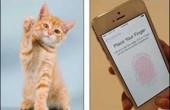 یک گربه از سد امنیتی جدید آیفون ۵s گذشت