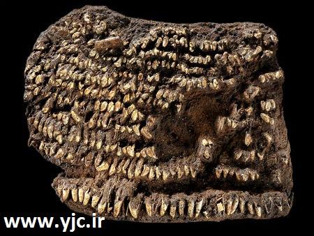 1654548 556 قدیمیترین آثار کشف شده روی زمین / عکس