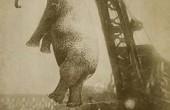 دار زدن یک فیل به جرم قتل! / عکس