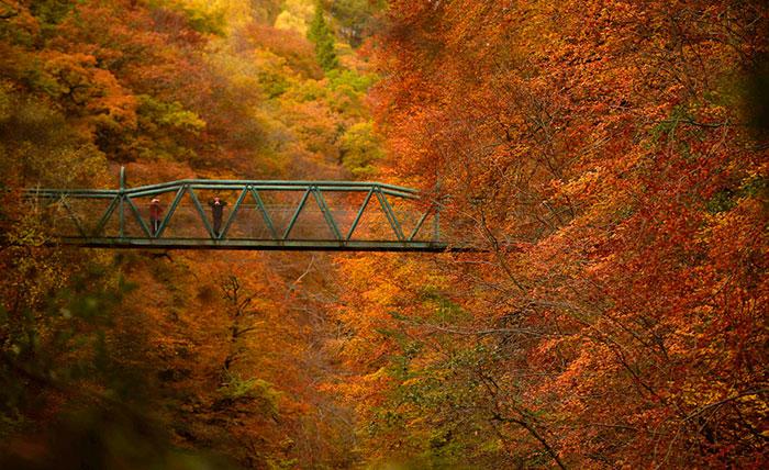autumn photo 4 تصاویر فوق العاده زیبا از فصل پاییز