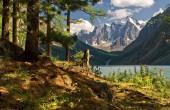 کوه های زیبا و دیدنی در سراسر جهان