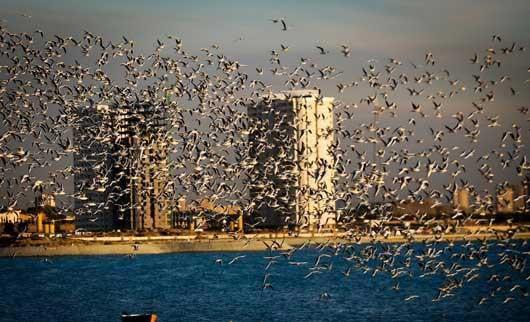 0.229722001386958583 parsnaz ir پرندگانی که تهران را فوق العاده زیبا کردند / عکس