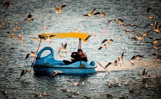 0.280739001386958586 parsnaz ir پرندگانی که تهران را فوق العاده زیبا کردند / عکس