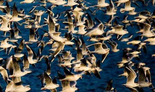 0.547328001386958580 parsnaz ir پرندگانی که تهران را فوق العاده زیبا کردند / عکس