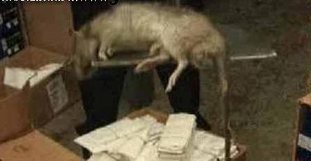 خانومی که موش وارد شلوارش شد, جدید 1400 -گهر
