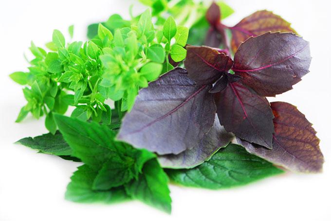 culinary herbs1 با این گیاهان دارویی یک داروخانه بسازید