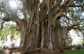 تاریخچه خواندنی مشهورترین درختان جهان