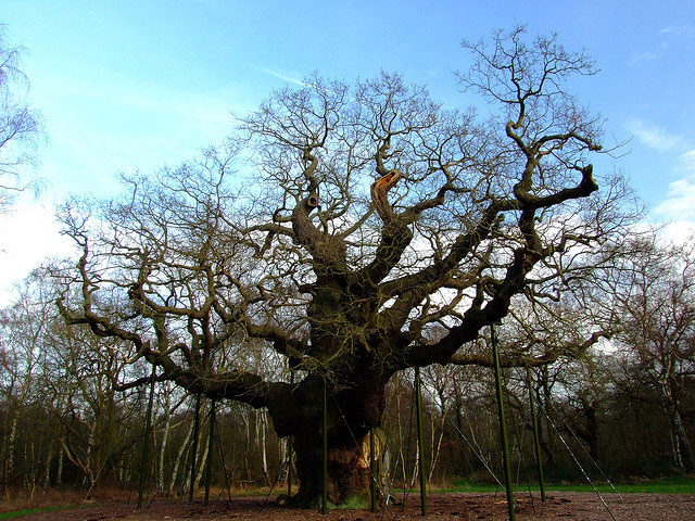 تاریخچه خواندنی مشهورترین درختان جهان, جدید 1400 -گهر