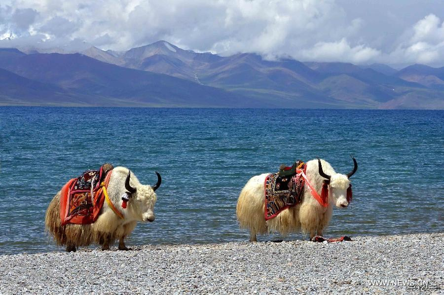 tibet most relaxing places in the world www.iranvij.ir  آرامش‌بخش‌ترین مناطق جهان
