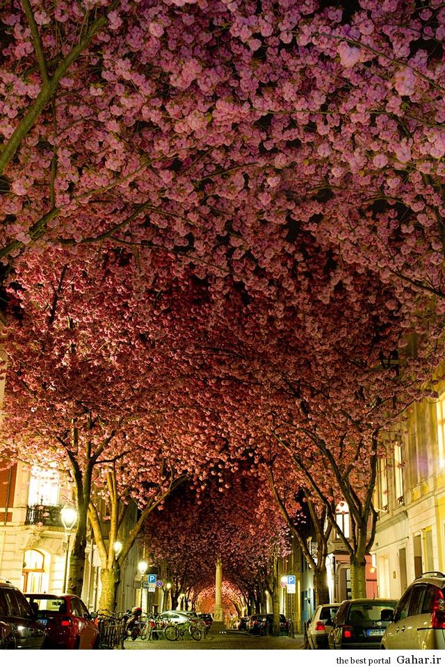 Tree Tunnels 2  تونل های درختی زیبا و رویایی از سراسر جهان