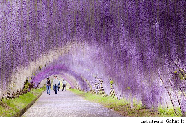 Tree Tunnels 6  تونل های درختی زیبا و رویایی از سراسر جهان