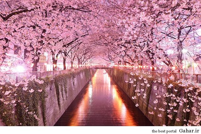 Tree Tunnels 9  تونل های درختی زیبا و رویایی از سراسر جهان