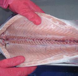 نحوه تمیز کردن ماهی به صورت تصویری و از بین بردن بوی آن
