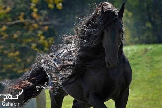 635998027971488836 عکس های زیباترین اسب جهان
