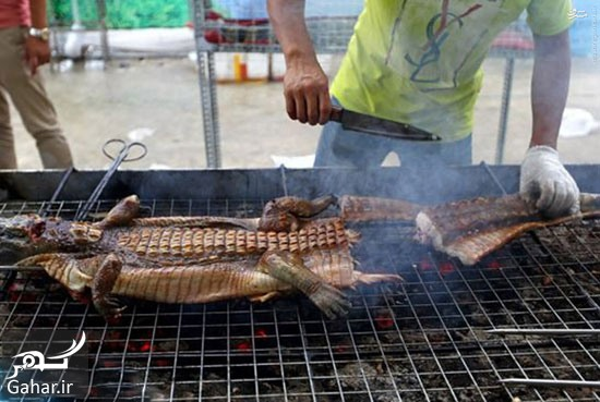 895869 227 کباب تمساح غذای پرطرفدار چینی ها + عکس