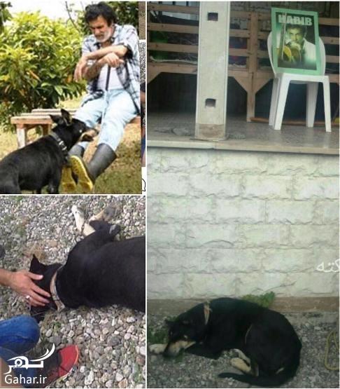 bozorgmehrhosseinpour 15 عکس: ناراحتی عجیب سگ حبیب بعد از درگذشت حبیب