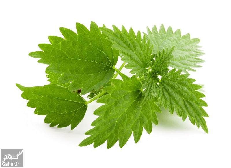 nettle herb خواص دارویی و درمانی گیاه گزنه