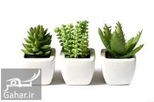 cactos آموزش نگهداری از گیاه کاتوس