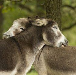 وجود روح در حیوانات واقعیت دارد؟