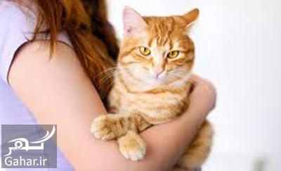 toxoplasmosis6 e2 همه چیز در مورد بیماری گربه