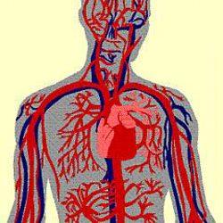 نقش تغذیه در بهبود گردش خون بدن