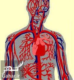 نقش تغذیه در بهبود گردش خون بدن, جدید 1400 -گهر