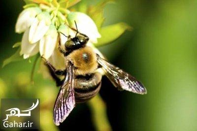 making2 new antibiotics1 ساخت آنتی بیوتیک با زنبور عسل
