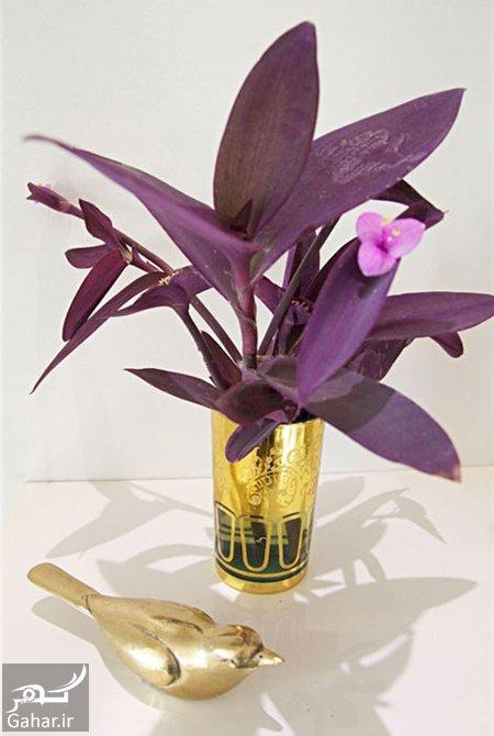 purple heart flower2 راهنمای پرورش گل قلب ارغوانی