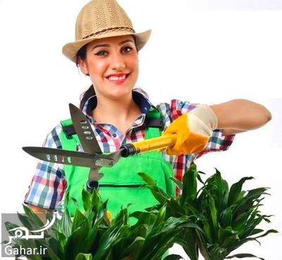آموزش هرس کردن گیاهان آپارتمانی, جدید 1400 -گهر