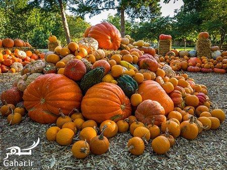pumpkin2 properties2 با خاصیت های کدو تنبل آشنا شوید