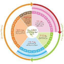 معرفی روش های تعیین روز تخمک گذاری