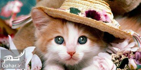 cat3 care3 guide1 آموزش و نکات مراقبت از گربه های ملوس