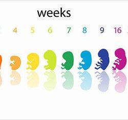 آموزش هفته سی و هشتم بارداری و مراقبت های آن