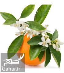 1 1 عرقیات مناسب فصل بهار را بشناسیم!
