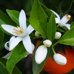 عرقیات مناسب فصل بهار را بشناسیم!