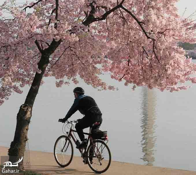مهم ترین فواید دوچرخه سواری برای بدن, جدید 1400 -گهر