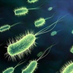 هر آنچه باید درباره بیماری وبا بدانید