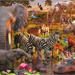 حیوانات باهوش دنیا کدامند؟