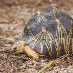کامل ترین لیست طول عمر حیوانات از بیشترین تا کمترین