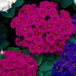 گل های تابستانی کدامند؟ معرفی گلهای فصل تابستان