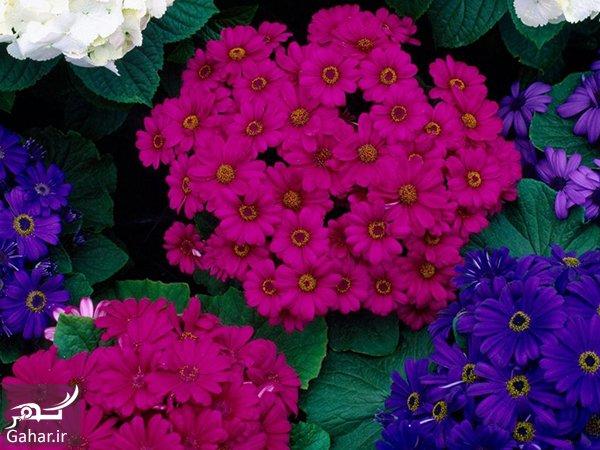 گل های تابستانی کدامند؟ معرفی گلهای فصل تابستان, جدید 1400 -گهر