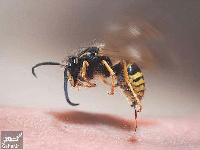 mataleb www.gahar .ir 20.06.97 9 درمان نیش زنبور به روش های سریع و ساده