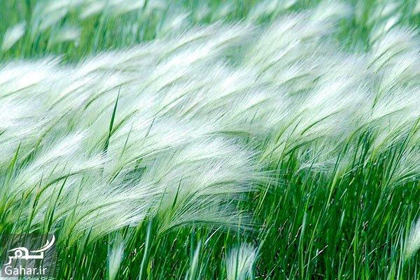 www.gahar .ir 19.07.97 2 باد و گردباد و تندباد و طوفان چه تفاوتی با هم دارند؟