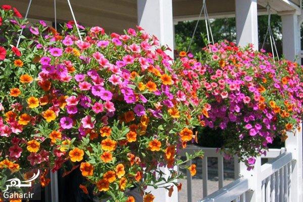 wwwgahar.ir 15.07.97 6 آموزش پرورش گل و گیاه در خانه برای افراد مبتدی