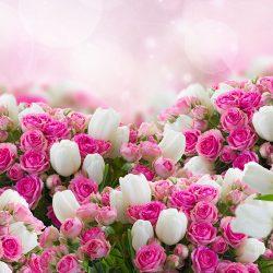 اسامی گل ها به ترتیب حروف الفبا