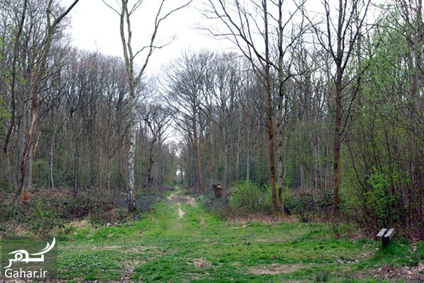 www.gahar .ir 12.08.97 7 با جنگل جیغ انگلستان آشنا شوید
